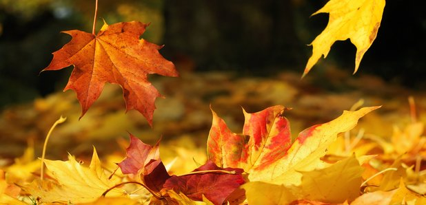 autumn-leaves-1350054645-article-1