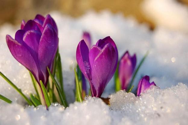 spring_flowers-1395073